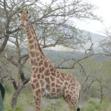 Among our favorites: the always-regal giraffe.