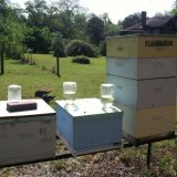 Inside these beekeeping boxes, hundreds of bees are working hard to make honey and wax.