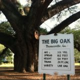 The Big Oak in Thomasville, GA, is a local treasure. You can stand in front and get your picture taken by a webcam mounted to the top of a streetlamp on the other side of the road!