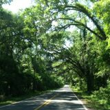 Canopied roads like this one can be found all over Tallahassee and the surrounding area. Sure makes for a lovely drive, doesn't it?