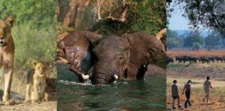 Expert Africa Teenage Safaris