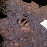 Going in search of dinosaur tracks is one of many activities offered by the resort.
