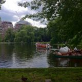 Swan Boat rides in Boston's Public Garden.
