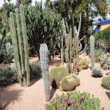 Marjorelle Gardens, Marrakesh