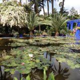 Marrakech-Marjorelle Gardens