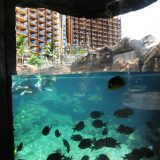 The Rainbow Reff Snorkel Lagoon is stocked with various local species of tropical fish.