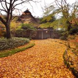 The driveway at Hotel Kamenoi Bessou covered with fallen leaves, adding an autumnal charm to the rustic and picturesque resort.