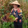 Emi Kinjo, owner of Emi-no-mise (restaurant of good taste and smiles) picks greens from her garden to serve patrons of her restaurant, a fabled eatery in Okinawa's Ogimi Village north of Naha. The town (population about 3,000) is reputed to have the highest longevity index in the world. A disproportionate number of residents are older than 100 and many credit this to a healthy diet, such as that served in Kinjo's establishment.