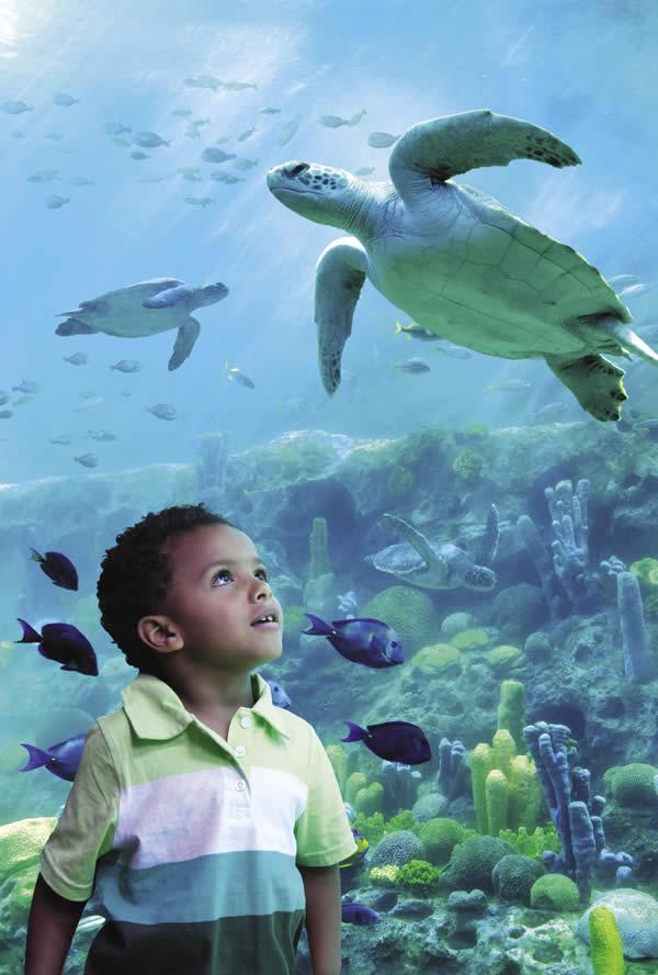TurtleTrek exhibit in SeaWorld Orlando