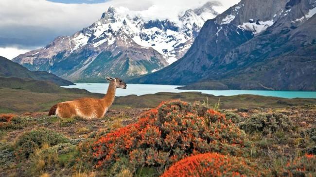 Torres del Paine-Tauck Patagonia