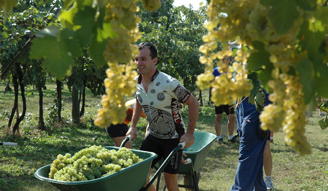 Pedaling Provence tour in France with Experience!Plus. (Photo courtesy of ExperiencePlus! Bicycle Tours)