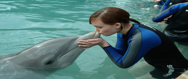 Dolphin Harbor
