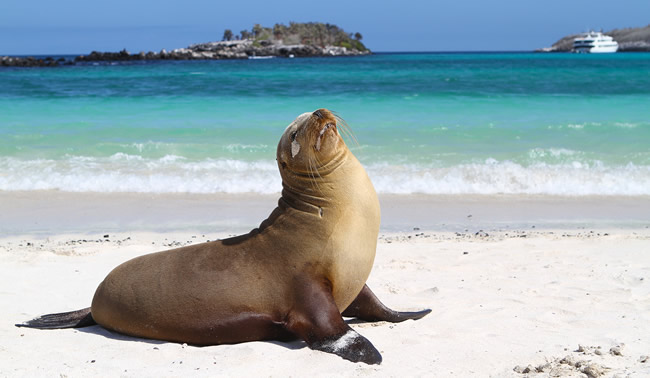 FAM trip to the Galapagos with G Adventures. (Photo courtesy of Daniel Sendecki.)