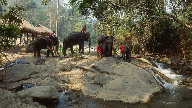 Elephant trek in Chiang Mai northern Thailand as part of the Four Seasons Around the World tour.