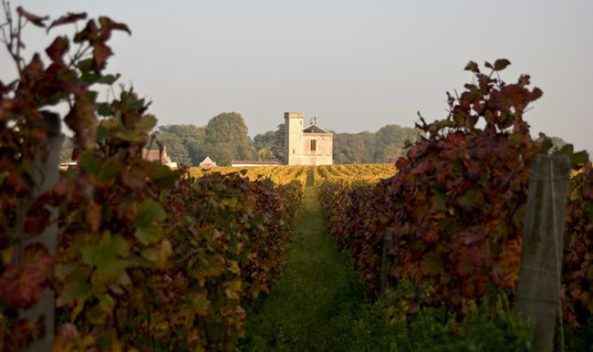 A Burgundy vineyard, part of the walking tours on La Belle Epoque's cruises.