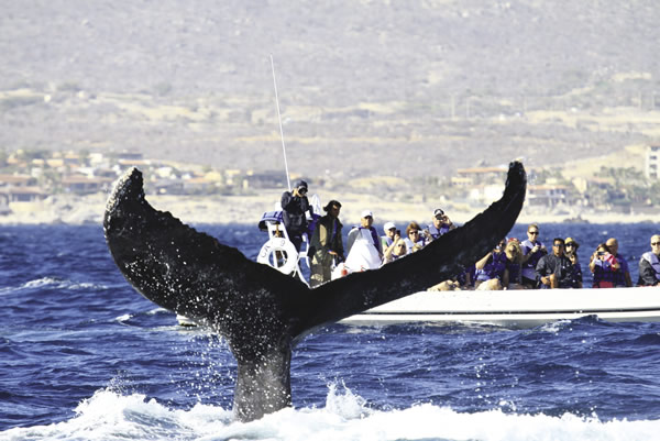 At Grand Solmar, guests can opt to take part in one of the area's many activities such as whale watching