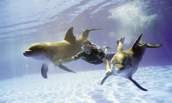 At Grand Solmar, guests can opt to take part on one of the area's many activities such a sa dolphin encounter