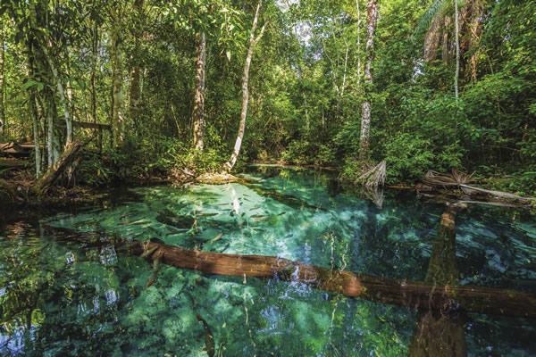 The Pantanal wetlands, situated near Cuiaba.