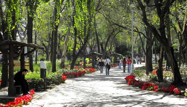 Condesa Park in Mexico City.