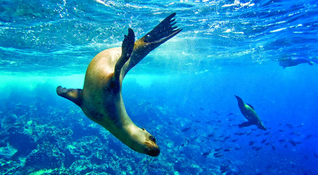 Galapagos with Flo Tours