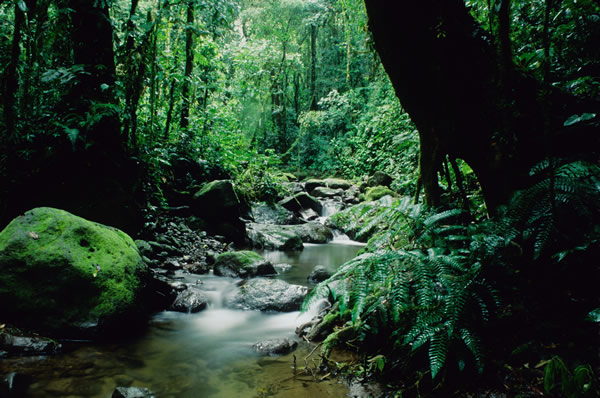 Panama is rich in wildlife and lush greenery