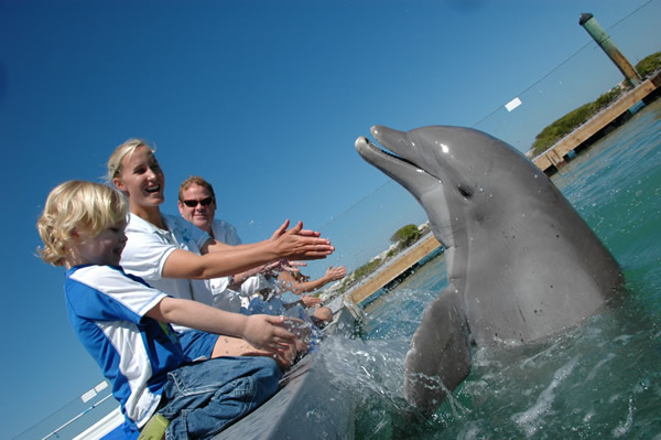 The Dolphin Connection is the only on-property resort dolphin program in the continental U.S.