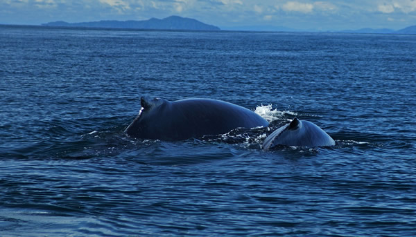 Whale watching is a must-do
