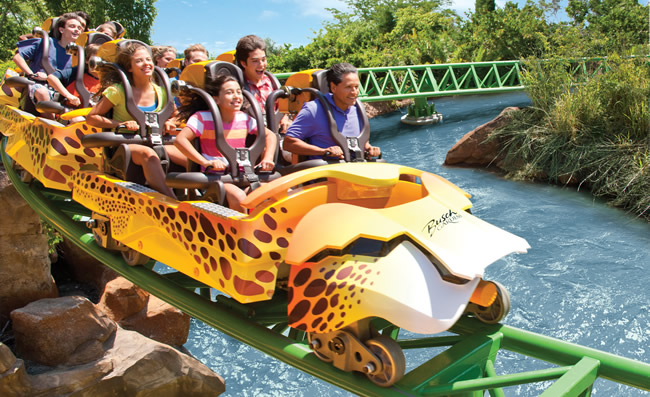 Cheetah Hunt Coaster at Busch Gardens  (Photo courtesy of Busch Gardens.)