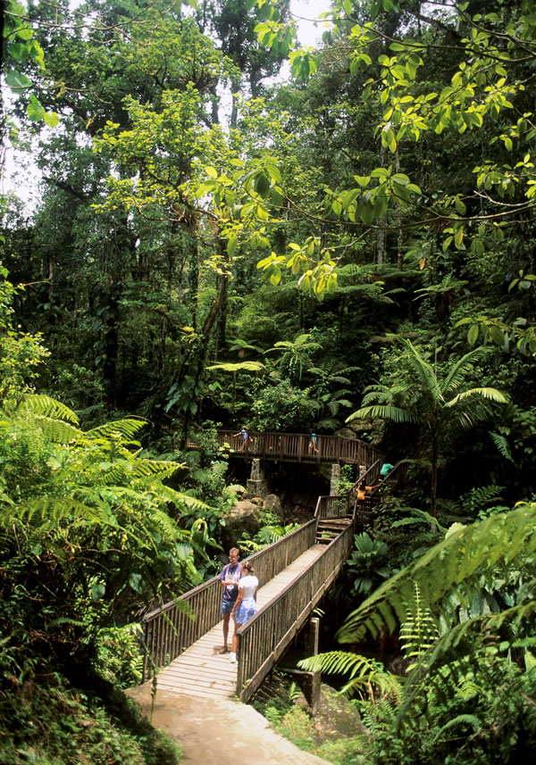 Forest trails and Carbet Falls on Basse-Terre.