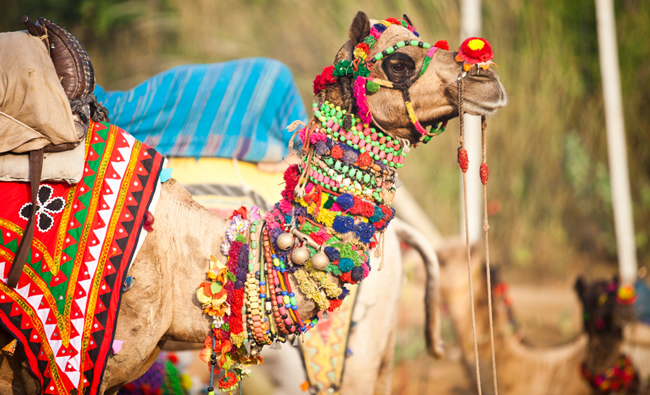 General Tours India