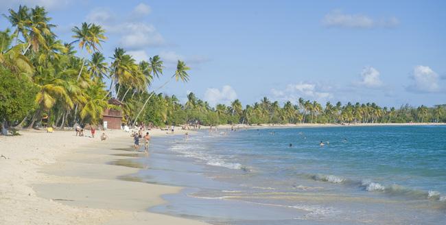 Grande Anse des Salines in Martinique. (Photo credit: Luc Olivier.)