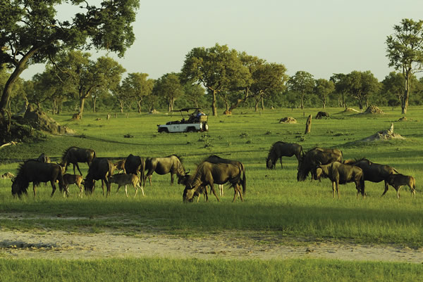 Zimbabwe's wildlife viewing is tops in Southern Africa.