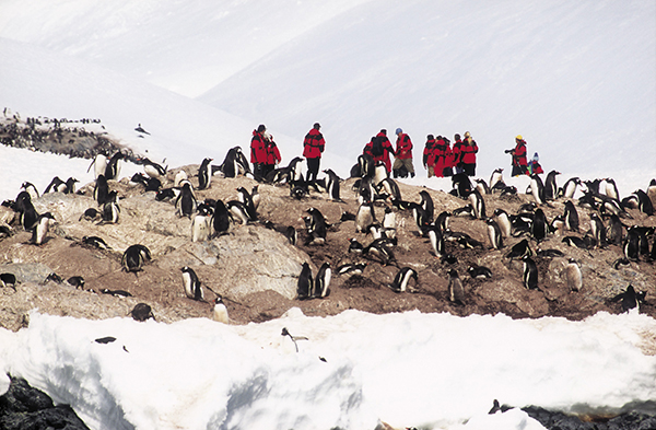 Hurtigruten guests mingle with the local residents of Antarctica