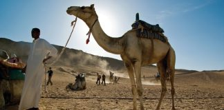 G Adventures Egypt