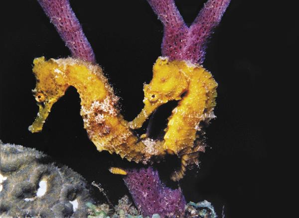 Saint Lucia's underwater marine life.