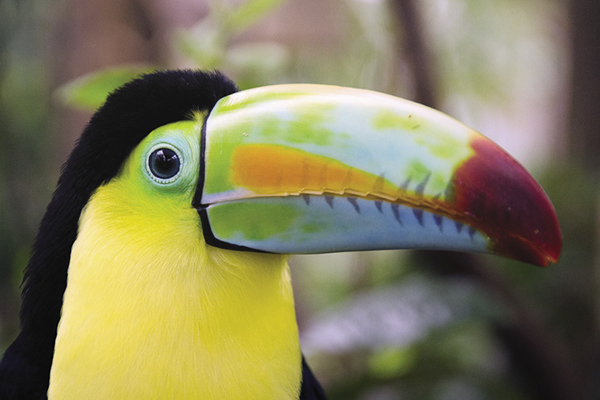 Costa Rica is home to innumerable bird species.