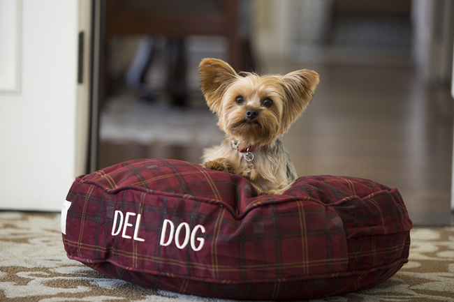 Indulge pets in the Del Dogs & Cats program at Hotel del Coronado.
