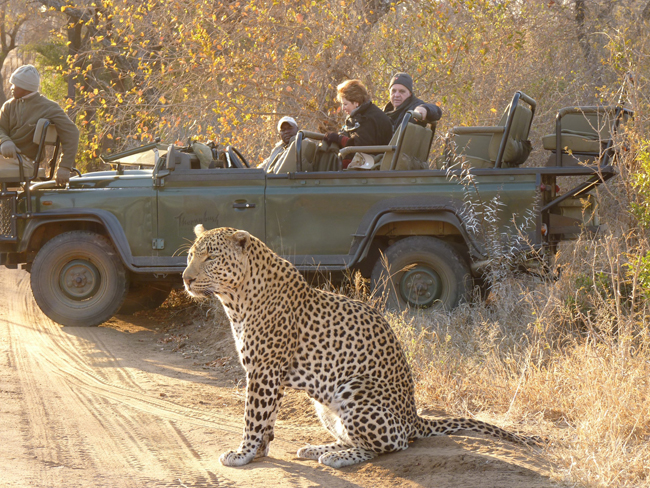 A leopard spotting during a safari through Thronybush. (Photo courtesy ofGeneral Tours World Traveler.)