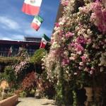 Bougainvillea in full bloom at Vallarta Botanical Gardens, included in Vallarta Adventures' Hidden Mexico tour.