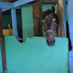Palomino Island, El Conquistador Resort's private island, has a horse stable where they rescue horses from Puerto Rico. Horses can take guests on a beachside trot or up the hills on the island.