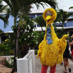 Bumping into Big Bird during a stroll through the resort.