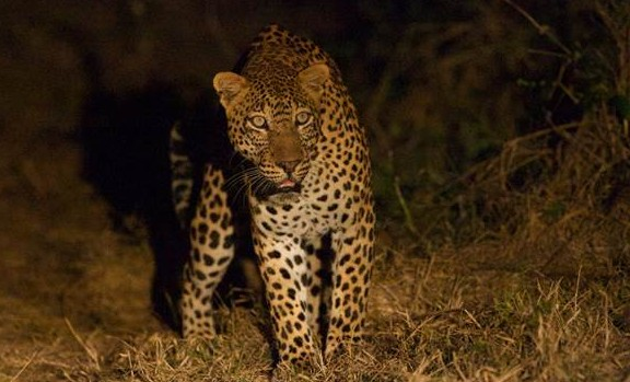 Safari-goers can experience bush photography in Zambezi.
