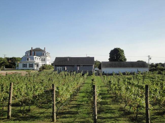 Langworthy Farm Vineyards.