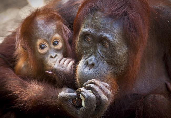 The Orangutan Feeding Station at Camp Leakey.  (Photo Credit Nick Rains.)