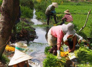 Khiri Travel Vietnam's tour celebrates the Kon Tum culture in the Central Highlands of Vietnam