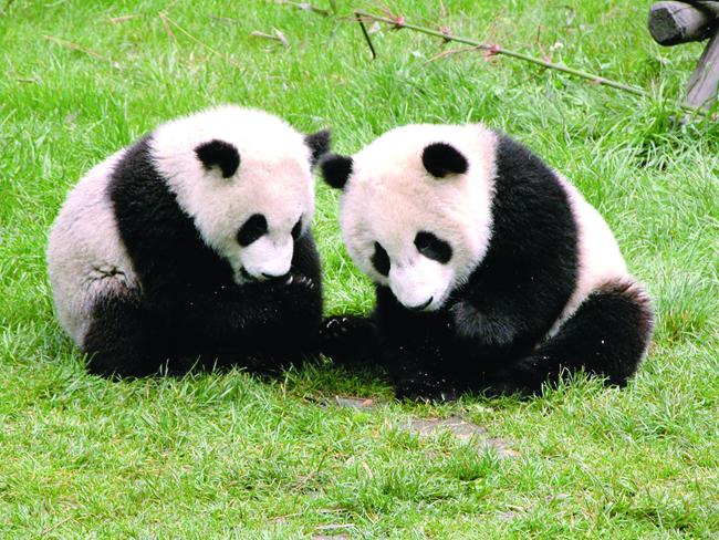 Family Friendly Journeys Panda Kindergarten