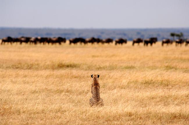 Game viewing with Yellow Zebra Safaris.