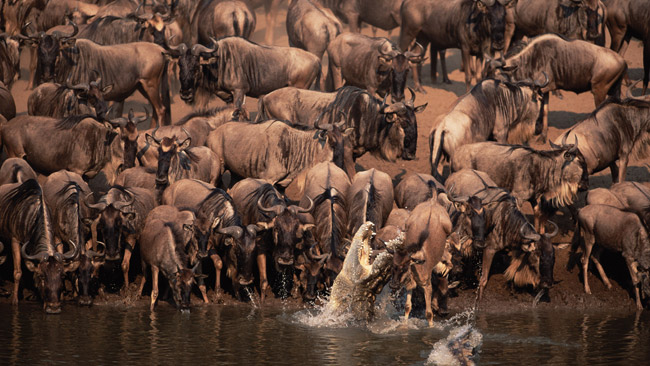 Survival of the fittest in northern Tanzania.