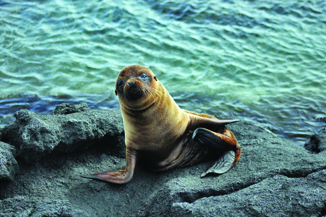 A sea lion sighting on an Ecoventura adventure.