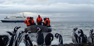 Close encounters with penguins on an Australis sail.